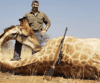 Idaho Fish and Game official resigns over photos of animals killed on African hunting trip